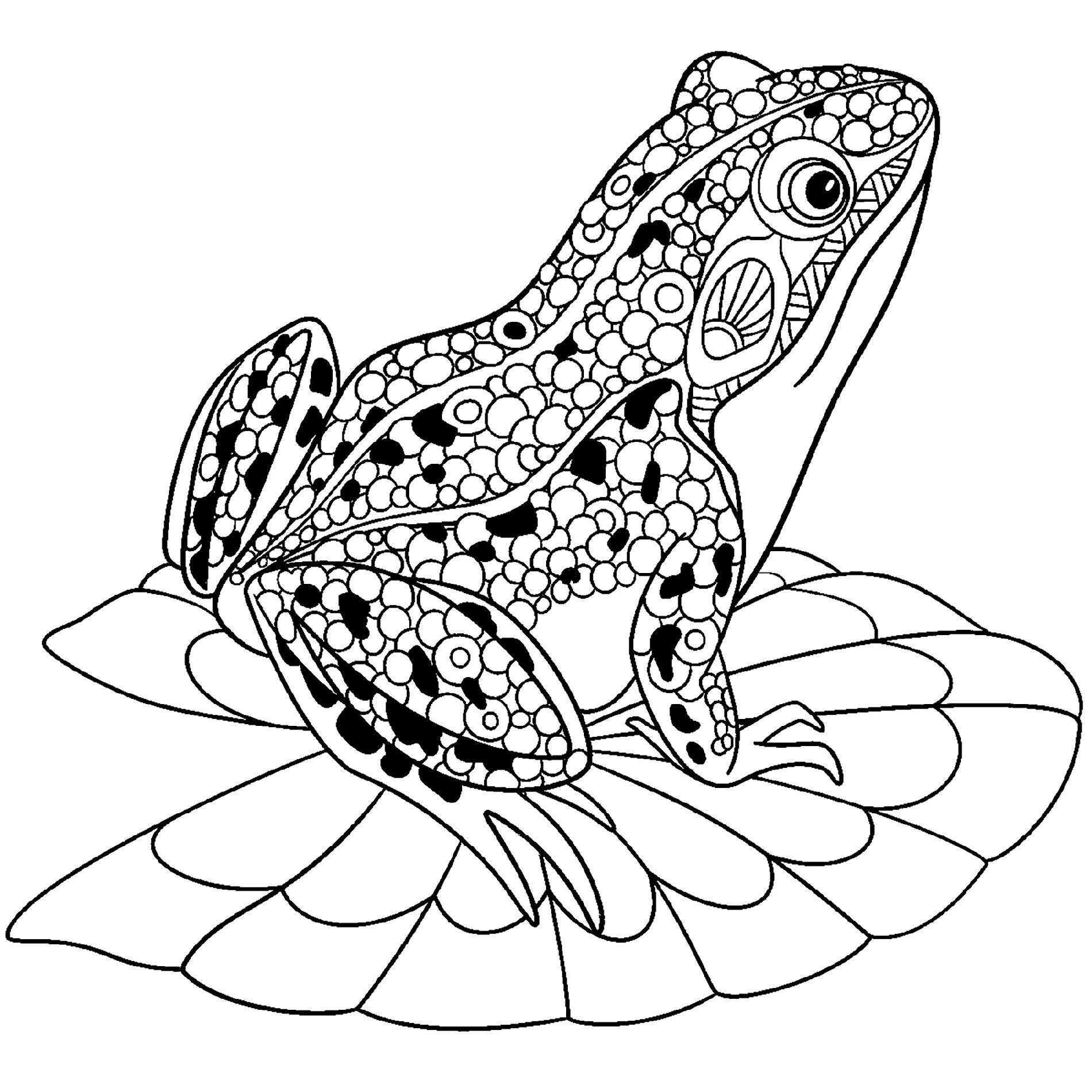 Frog Color Sheet for Adult