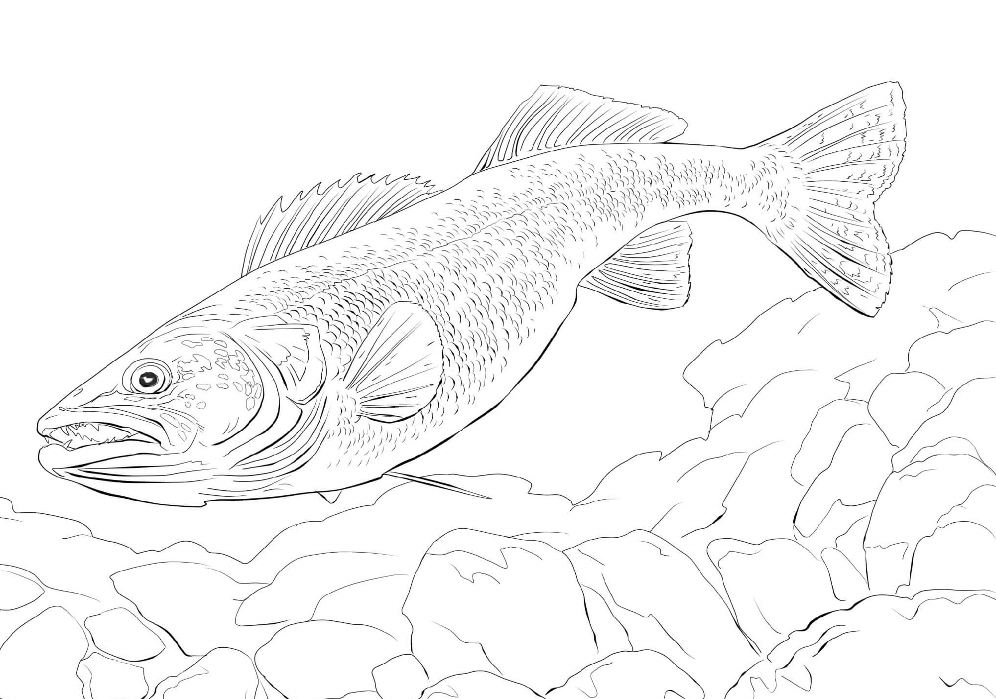 Fish Coloring Page Realistic