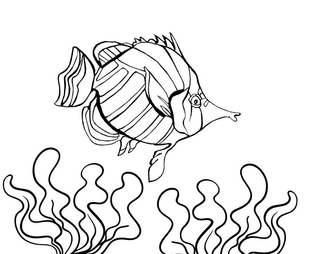 printable color pages of fish